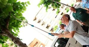 Vila-real impulsa un pla pilot de control biol�gic de plagues que actuar� en 300 arbres de la ciutat durant un any