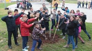 M�s de 600 escolars de Vila-real planten arbres en els parcs propers als seus col�legis en la Setmana Ecol�gica
