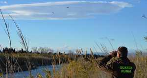 La Guarderia del Consorci del Riu Millars compta amb 21 corbs de mar grossos en la desembocadura