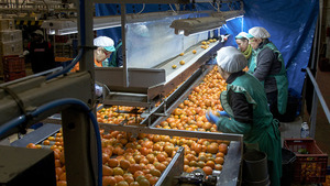 Formaci� per a l'ocupaci�: manipulador d'aliments hortofrut�coles
