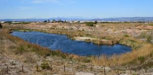 Una esp�cie d'�nec en perill d'extinci� visita les llacunes artificials del Paisatge protegit del Millars