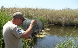 Desapareixen els fartets de la gola Fonda del Paisatge Protegit de la Desembocadura del riu Millars